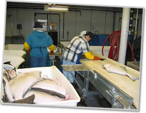 norquest halibut processing plant alaska